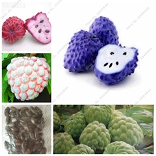 11pcs/ bag Exotic Sugar Apple Seed Outdoor ANNONA SQUAMOSA Fruta Organic Buddha's Head Fruit Juicy Apple Custard(China)