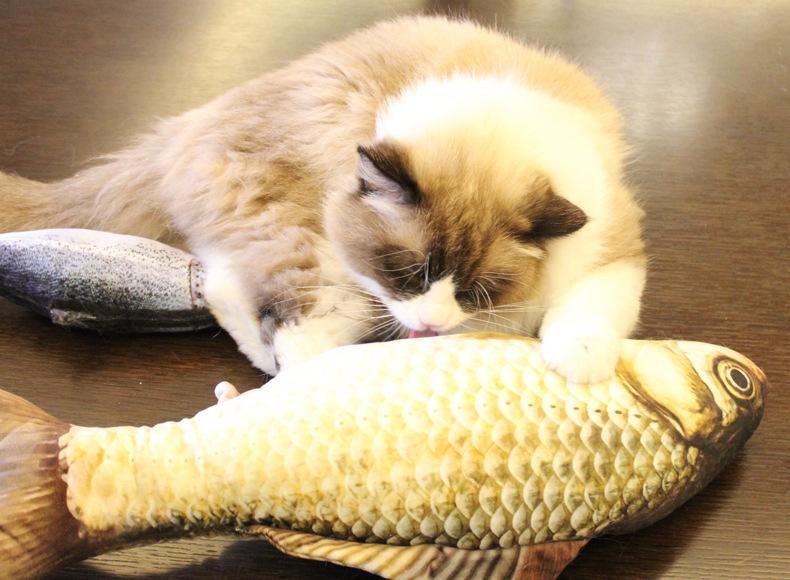 funny fish cat toy Funny Fish Cat Toy-Free Shipping HTB1K8q7SpXXXXbGXpXXq6xXFXXXF