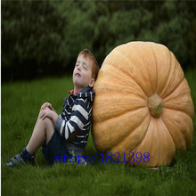 Free shipping 20 seeds / pack, Atlantic Giant Pumpkin Seeds vegetable seeds