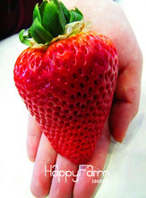 Hot Sale!100Seed/Bag big giant red fruit strawberry seeds DIY Garden fruit seeds giant straberry,#LFCNHY(China)