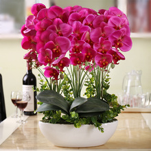 Phalaenopsis suite living room interior decoration flowers potted 100 seeds(China)