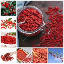 400pcs/ bag Heirloom Chinese Wolfberry Seeds Organic Lycium Fruit Bonsai Plant Juicy Goji Berries Ornamental Tree for Garden(China)