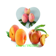 Top quality (Xinjiang) Small Potted Tree Flat Peach Seeds 5 Pcs, Everything To Gain If The king, Delicious Fruit(China)