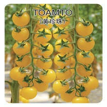 Yellow pearl tomato seeds 200 seeds selling organic vegetable seeds(China)