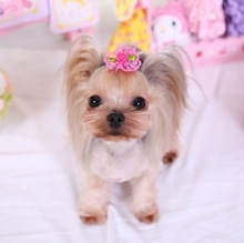 Pet Dog Bows  rose lace flower Cute Pet Dog Hair Clips,Fashion  Hair Clips Style Boutique Pet Grooming Hair Accessories
