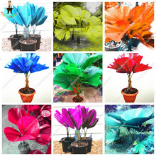 Hot Sale 50 Pcs/Bag Rainbow Palm Tree, Lady Palm Potted Plants Seeds, Tree Seeds Bonsai Angiosperms, Mixed Perennial Rare Flower(China)