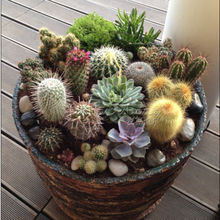 Marseed 20pcs Mix Multi Style Cactus Seeds Rare Plants Seed Home Decoration for Garden Indoor Plant Bonsai Seeds MAS005