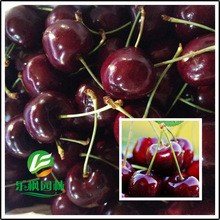 Direct US Cherries cherry tree seed seed dwarf cherry tree fruit seed South 5 seeds / pack
