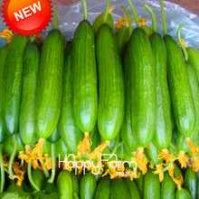 Big Promotion!Dutch Cucumber,Cucumber Seeds Fruits and Vegetable Seed 50 Pieces / Bag,#OI4EB0(China)