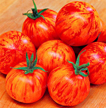 100PCS Tigerella Rare Fresh Tomato Seeds 100% Organic And Non GMO Seeds Fruits Vegetables Garden Greenhouse Crop free delivery(China)