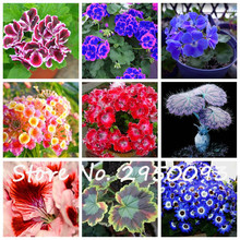 Loss Promotion! 10 Pcs Geranium Seeds Pelargonium Peltatum Coleus Seeds Easy Grow DIY For Living Room Potted Flower Planting