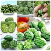 70pcs/ bag Mini Thumb Watermelon Seed Outdoor Juicy Delicious Bonsai Potted Fruit Plant DIY Gardening Rare Fruit Seeds(China)