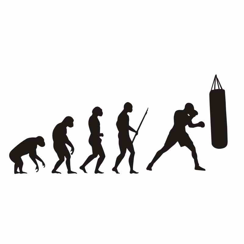 DCTAL Boxing Evolution Sticker Kick Boxer Play Car Decal Free Combat Posters Vinyl Striker Wall Decals Parede Decor