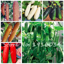 200Pcs Green, White, Red, Cucumber Seeds, Polish Variety, Mini Cucumber Vegetable Seeds Organic NO-GMO Seeds for Home Garden(China)