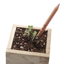 1 box 8 Item Novel Exotic Sprouts Pencil Germination Can Be Planted Pencils Buds Contains Different Seeds(China)