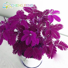 Hot Sales! 30pcs Bashful Grass Seeds Mimosa Pudica Linn, Foliage Mimosa Pudica Sensitive Bonsai Plant Home Garden Free Shipping(China)