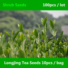 Widely Cultivated Chinese Longjing Tea Seeds 100pcs, West Lake Dragon Well Tea Shrub Seeds, China Famous Tea Long Jing Cha Seeds(China)
