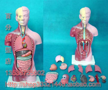 male torso 15 parts Mannequin 28cm human body model human body model free shipping