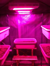 during shipping 6 Band LED Grow Light lighthouse led,165W LED Grow Light+Free Shipping+3 years warranty