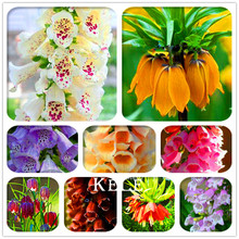 Sale! 100 Seeds/Pack Fritillaria foxglove Digitalis potted bonsai garden seeds DIY home garden(China)