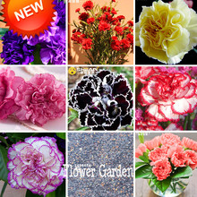 Sale!16 Colors Carnation Seeds Balcony Potted Courtyard Garden Plants Dianthus Caryophyllus Flower Seeds, 200 Pcs,#X7ARCZ