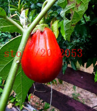 200 eggplant seeds EXOTIC RED EGGPLANT SOLANUM MELOGENA ORGANIC NON GMO vegetable seeds for  GARDEN