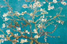 Laminated Almond Branches in Bloom, San Remy, c.1890 Poster by Vincent van Gogh 50*70cm
