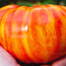 Hot-sale!2017 big Promotion 100pcs/bag rare mini or giant colorful tomato seeds fruit vegetable seeds bonsai for DIY home garden