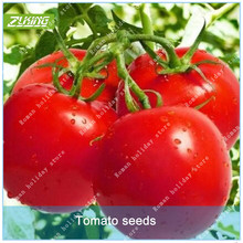 ZLKING 100 Pcs tomato Bonsai Seeds High Germination Rate Organic Easy To Grow South Can Be Eaten Directly Seed Vegetables Plant