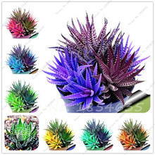 High Quality Mulit-color Aloe Vera Seeds Rare Herbs Seeds Tree Seeds Bonsai Plants For Home & Garden 50Seeds/Pack Free Shipping