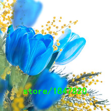 GGG Hot Sale Rare Blue Tulips Flowers Seeds Bonsai Tulip Seeds Flower Plants 500 Particles / lot(China)