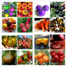 800 seeds / 1pack 16 kinds of rare tomato peter giant yellow tree Seeds Vegetable DIY Growing Trouble for Home & Garden Planting