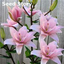 50pcs Perfume Lily Seeds +secret Gifts Flower Germination 99% Creepers Bonsai DIY Garden Supplies Sementes Indoor Pots Planters(China)