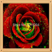 200PC German green heart of red roses seeds,beautiful bonsai flower seeds