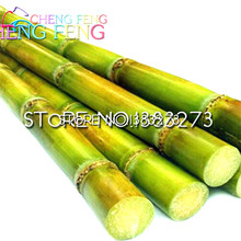 100 Pcs Sweet Natural Sugar Cane Plant Seeds Saccharum Officinarum Plant Seeds Rare Fruit Seeds Home * Fruits Bamboo Gigante(China)