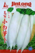 Korean white radish seeds vegetable seeds radish seeds can be eaten raw crisp radish Yield 10 g / bag