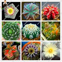200pcs/bag Colorful 12 kinds of Rare Cactus Seed Ball Succulent Flowers Foliage Magical Garden & Home Plant Semillas Flora