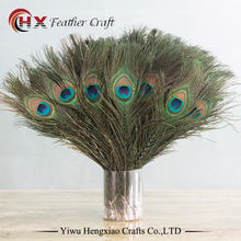 wholesale 50pcs/lot 25~30cm dyed and purple Natural Peacock Feathers for sale decorative feathers