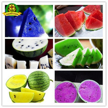 Home Garden Heirloom Watermelon Seeds 50pcs Sweet Taste Fruit Vegetable Seed Plant Blue Yellow Green Colored Watermelons(China)