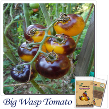 Vegetable seeds,VERY RARE BUMBLE BEE HEIRLOOM TOMATO! LOW ACID 50 SEEDS! Mini fruit vegetable garden