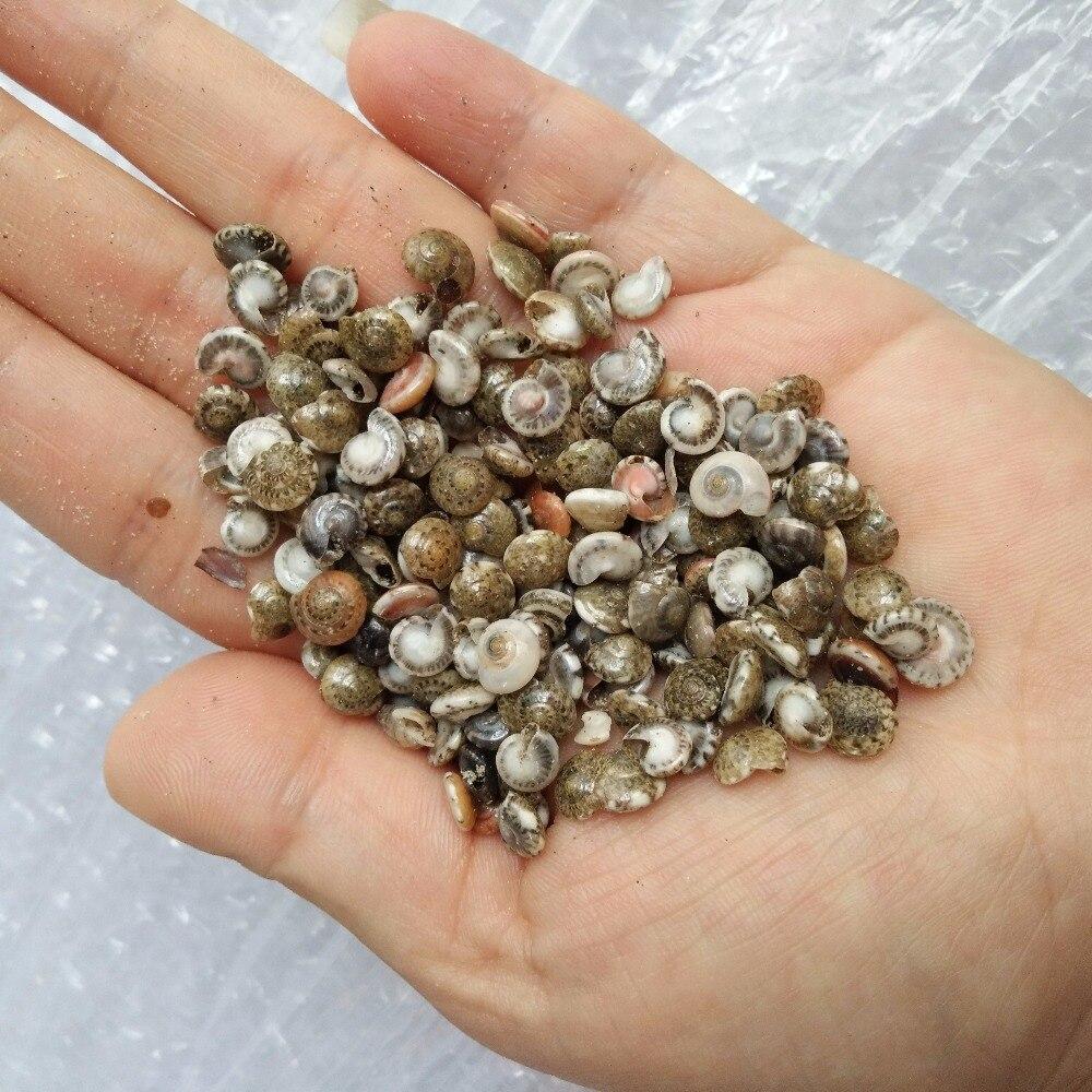 "200 Tiny Indian Ocean Shell Mix Mini Shells 1//4/"" Seashells Crafts Beach Decor"