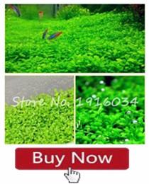 Grass 13