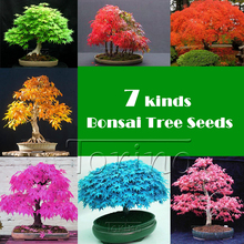 50 Pcs -8 kinds Rare Japanese Maple Seeds,Bonsai Tree Seeds,potted plants + rose gift, suit for DIY Home Garden, Free Shipping