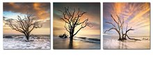 BANMU 3pcs Modern Decor Giclee Prints Framed Artwork Tree Leaves in Sea Pictures to Photo Paintings Print on Canvas Wall Art