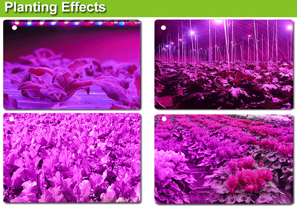 New Free shipping 300W LED Grow lights  Houseplant Grow tent Garden Greenhouse plant 5W  Epistar Flowers Herbs Full spectrum  (28)