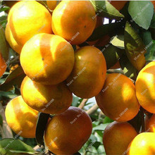 Bonsai Fresh Orange Seed Tangerine Citrus Seed NO-GMO Mini Tree Balcony Patio Potted Fruit Trees Funny Potted Plant 20 Pcs / lot(China)