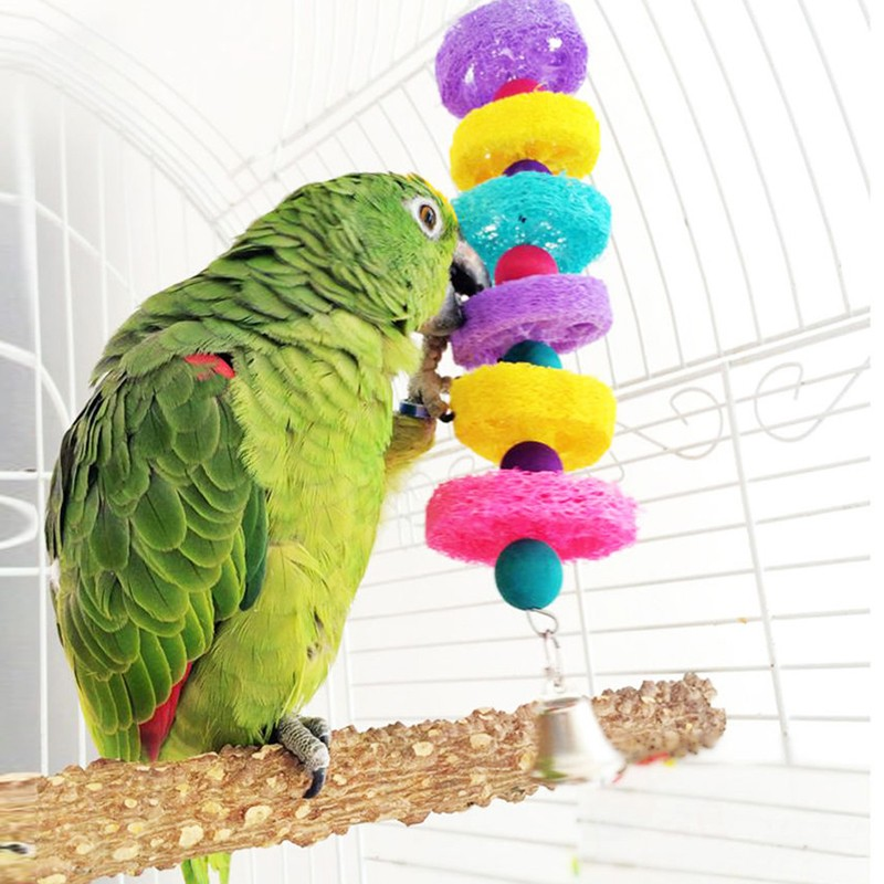 Bird Swing Image