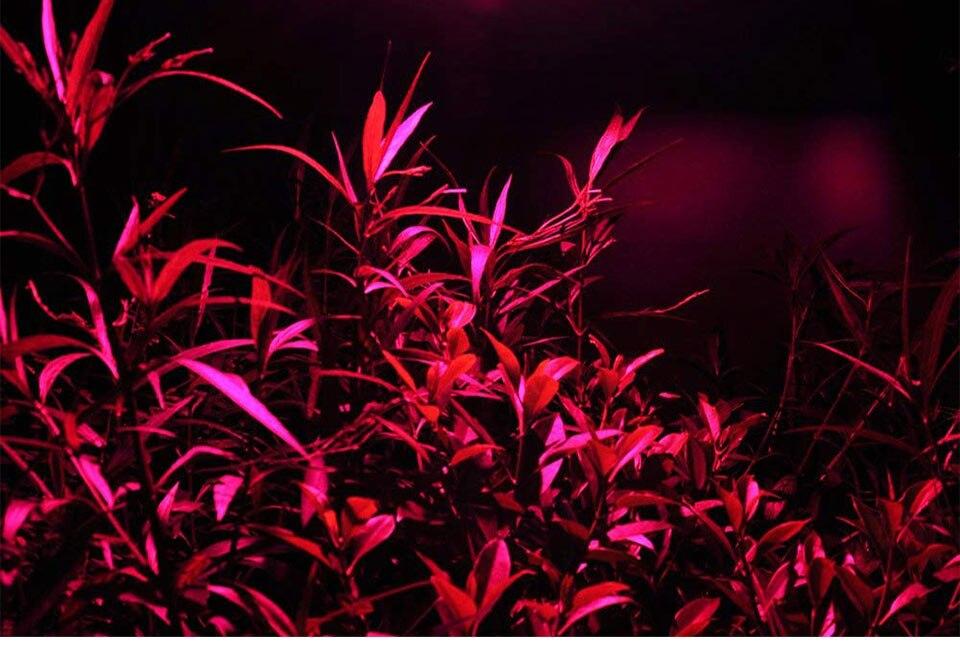 AC 110V 220V LED COB Lamp Chip 20W 30W 50W 100W 150W Full Spectrum LED Plant Grow Light Driverless Smart IC DIY LED Floodlights (22)