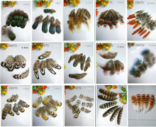 A variety of birds! 20 pieces / bag quality natural pheasant feathers, DIY costume crafts decoration(China)