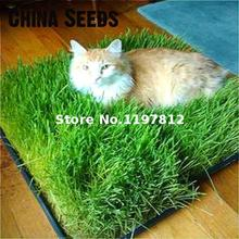Cat Grass Seed Grass Seed Eating Kittens About 200 Particles Bonsai Health Care Grass Plant Seeds Rare Gatden Contrareembolso